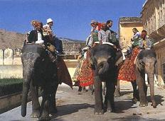 Elephant safari in Fort Aamer
